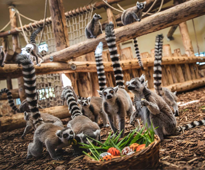 Živalski vrt Veszprem in Blatno jezero z goHolidays!