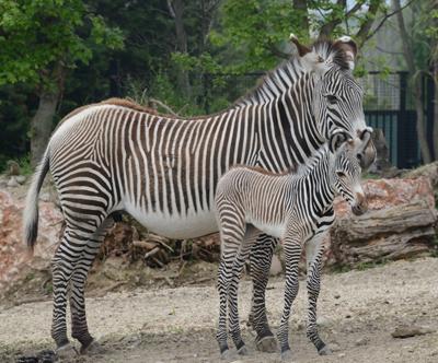 Verona in možnost avanture v Safari parku z goHolidays!