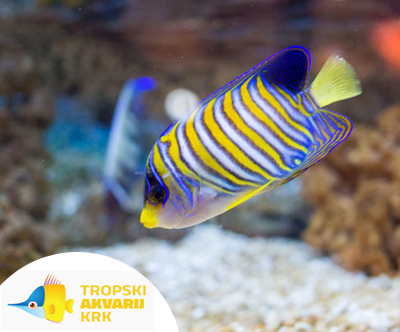 Otroška vstopnica za Tropski akvarij Krk