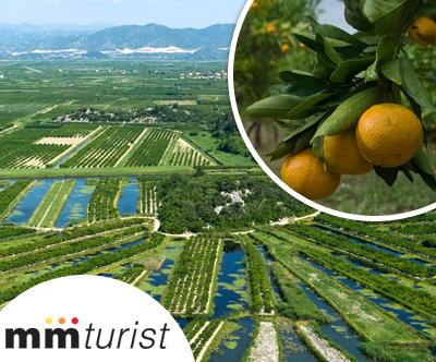 Neretva in nabiranje mandarin