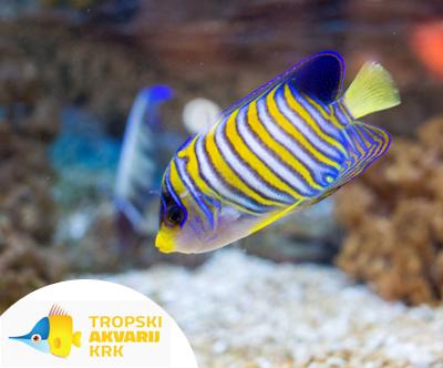 Odrasla vstopnica za Tropski akvarij Krk