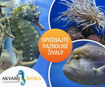 Odrasla vstopnica za Akvarij Baška