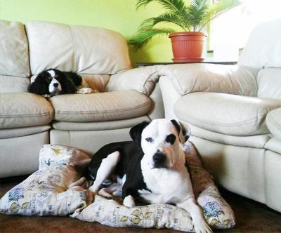 1-dnevno varstvo psa v pasjem hotelu Zlate tacke